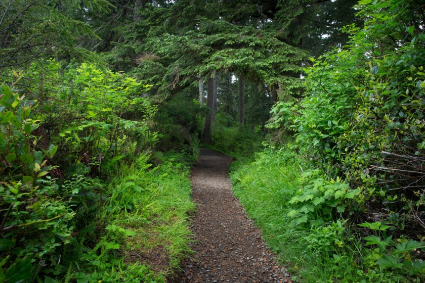 forest_tunnel_stock_by_leeorr_stock-d65qrmw.jpg